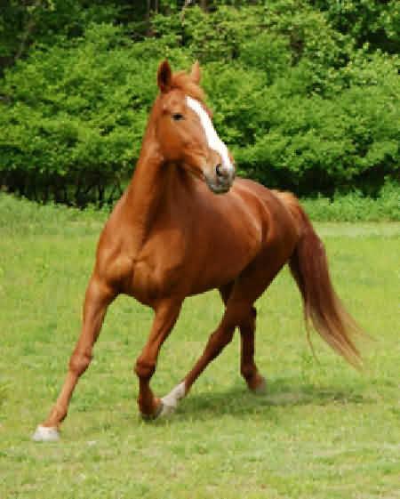 Поведение лошадей