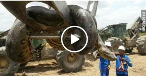 http://5five-star.blogspot.in/2015/12/biggest-anaconda-cought-in-consturction.html