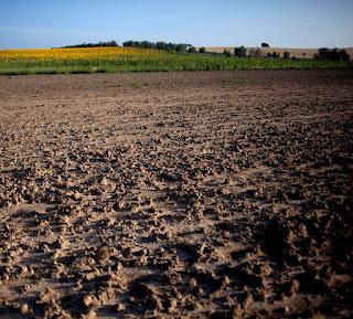 El progreso, con sus tractores y sus venenos, está convirtiendo a Andalucía en una Nueva Africa.