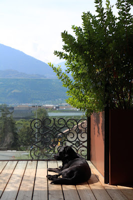Hund am Balkon im Designhotel Muchele