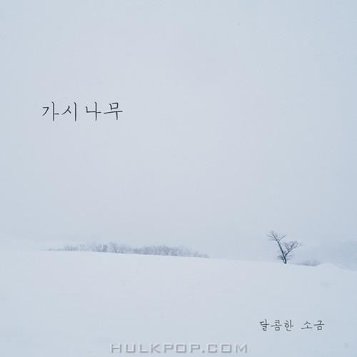 Sweet Salt – 가시나무 – Single