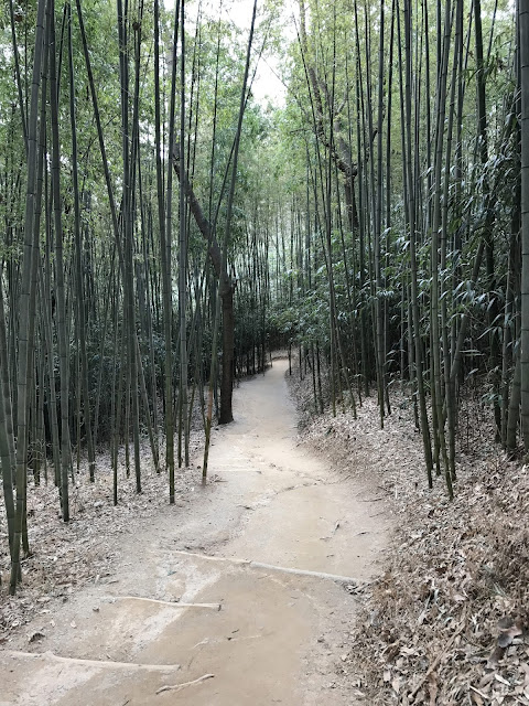 bamboo grove damyang Juknokwon