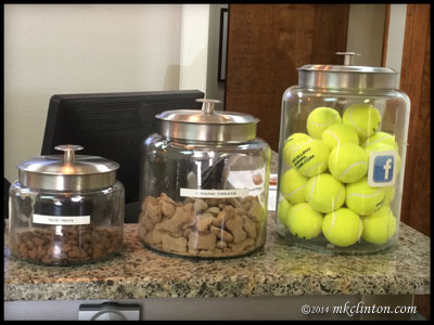Jars filled with cat treats, dog treats and tennis balls at the vet's office