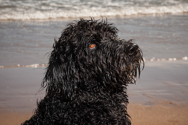 Aberdeen dog photographer, Jamie Emerson of Hairy Dog