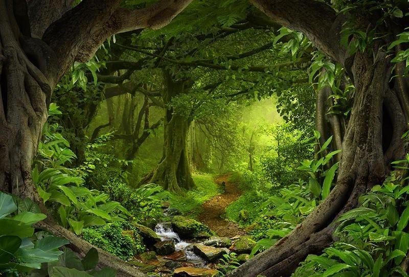 الغابات و أنواعها العلم نور
