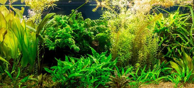 Nowoczesna architektura Roślinność w akwarium krok po krok - Blog ZooKarina ZY15