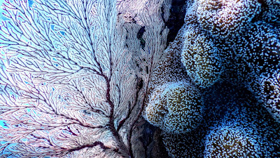 Photo coral reef by Tomoe Steineck on Unsplash