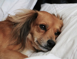 7 Reasons It's Actually Better to Let Your Dog Sleep in Your Bed