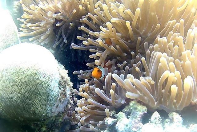 Keindahan bawah laut di Gili Nanggu, sumber ig @bernikedavita