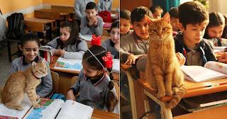 Γάτος υιοθετήθηκε από δημοτικό της Σμύρνης και κάνει μάθημα μαζί με τα παιδιά