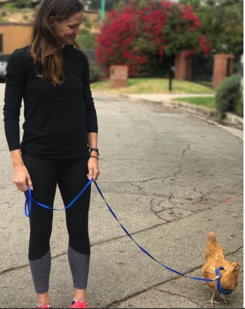 Jennifer Garner takes a stroll with her pet chicken, Regina