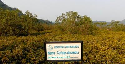 keindahan panorama hutan mangrove