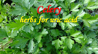 Best Herbal Remedy Uric Acid