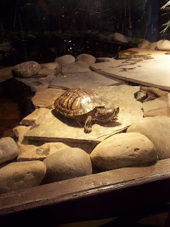 Image result for garden state discovery museum turtle