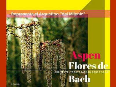 Aspen, Flores de Bach indicado para las personas con miedo sin saber el porque