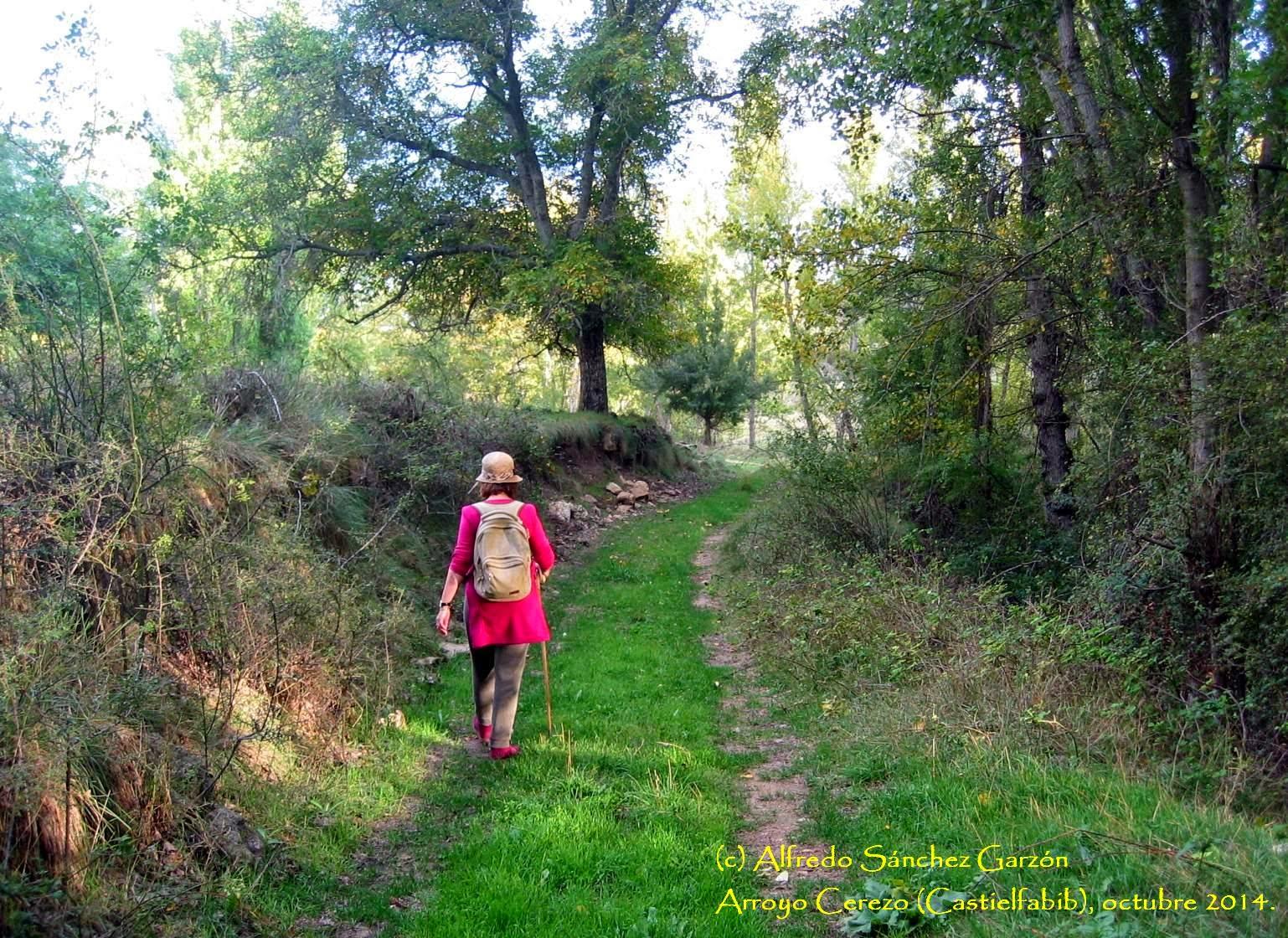 arroyo-cerezo-rambla-camino-castielfabib