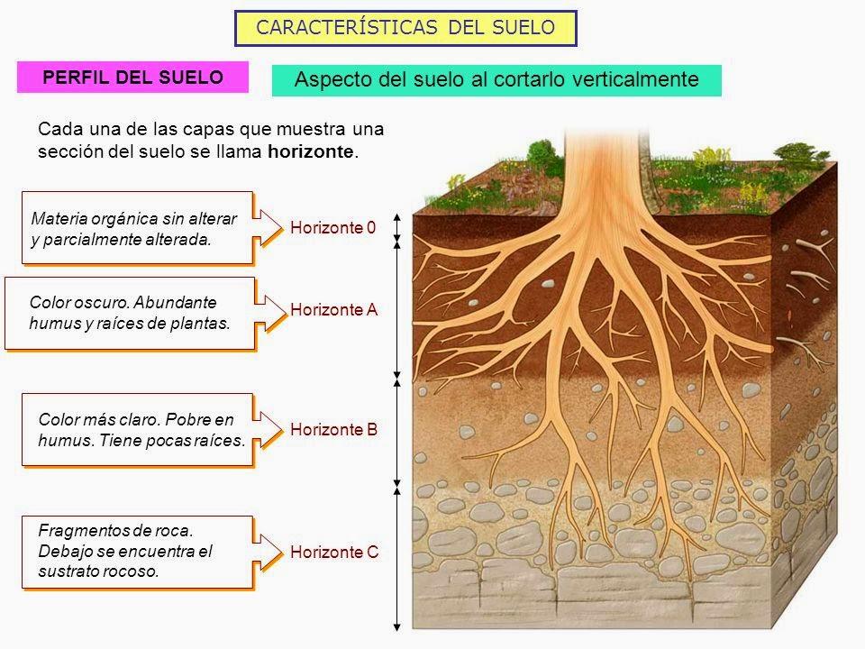 Fundamentos de la ciencia historia de la ciencia del suelo for El suelo y sus capas