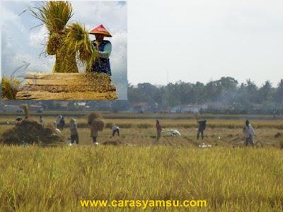 Alat perontok padi tradisional