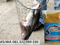 Umpan Serbuk Ikan Patin Galatama