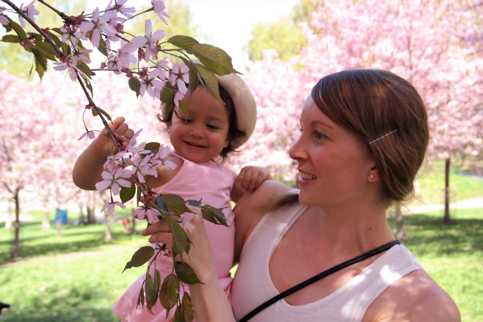 Roihuvuoren kirsikkapuistossa