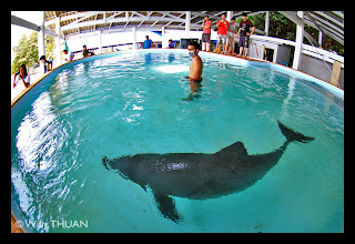 Dolphin rescue at Phuket Aquarium