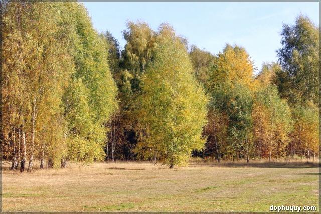 mùa thu đến, lá đã chuyển sang màu vàng úa