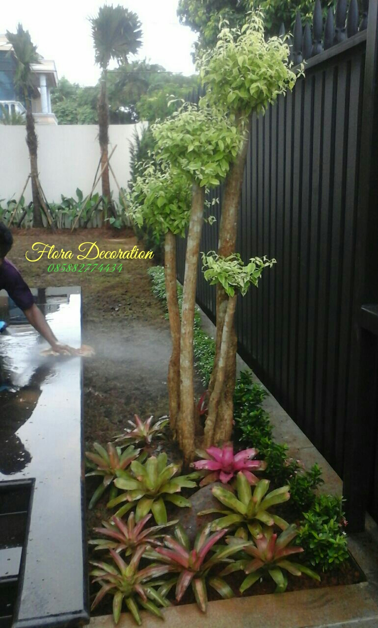 Tukang Taman Profesional Melayani Jasa Tukang Taman