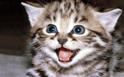 angry-cat-kitten-crying-face-beautiful-pics