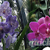 Orchid Cultivation Techniques and Care Instructions