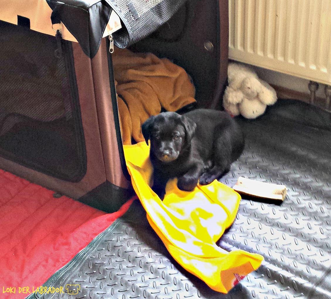 Schwarzer Welpe mit Hundebett