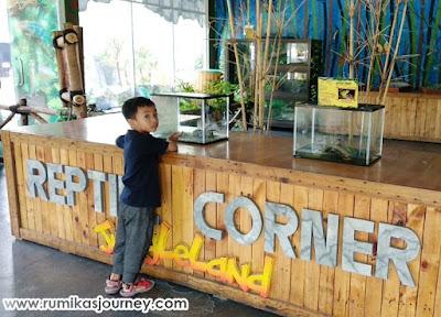 wahana animal corner hewan reptil di jungleland sentul