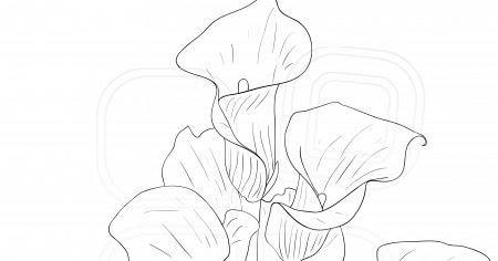 Hindart3: Draw a Calla Lily