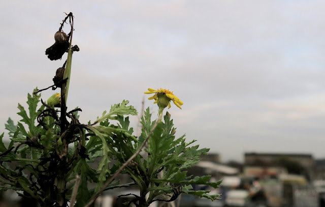Yellow flower on wall in front of urban landscape