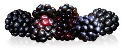Blackberry Fruit with Polyphenol Antioxidants