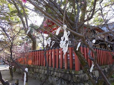 【大阪府守口市】佐太天神宮の梅