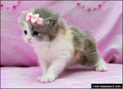 صور صور قطط كيوت 2020 خلفيات قطط جميلة جدا cats25.png