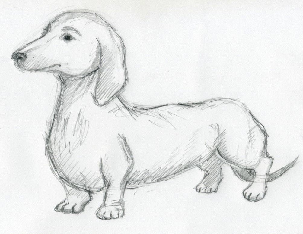 Dog Drawing ~ 3D Drawing