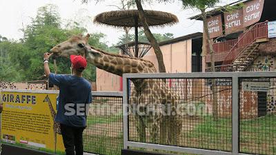 Informasi Lengkap Harga Tiket Masuk Jatim Park Dua Batu Malang Batu Secret Zoo Museum Satwa
