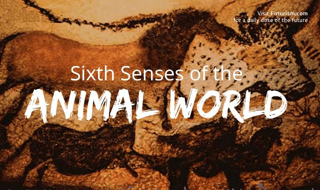 Sixth Senses Of The Animal World
