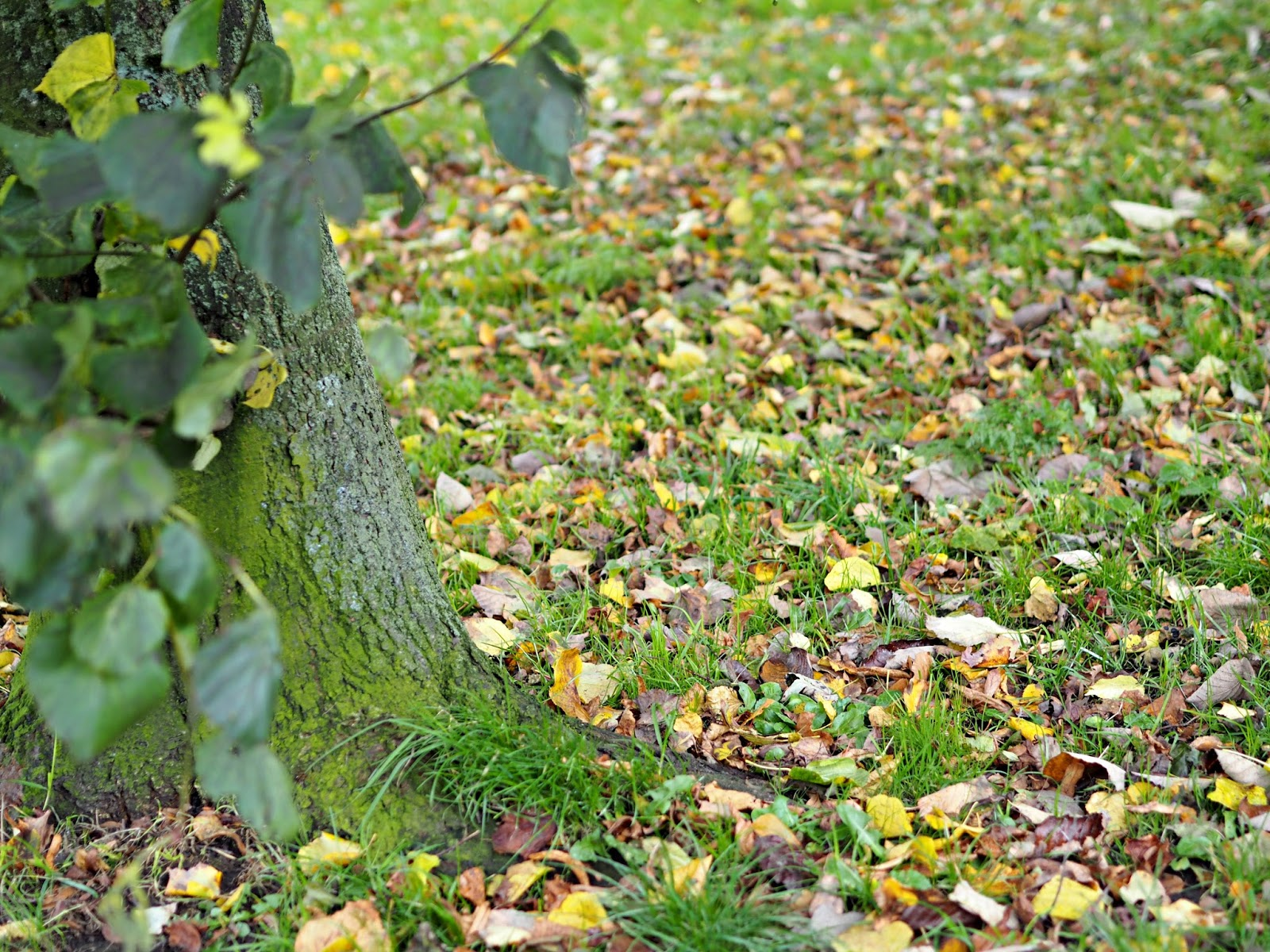 tree trunk and leaves