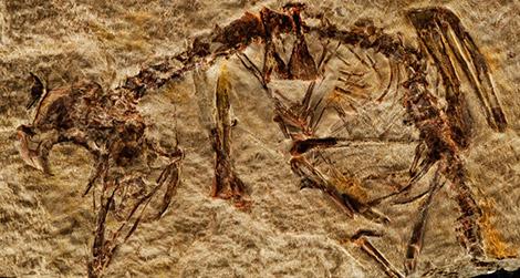Fosil Burung Purba 127 Juta Tahun Lalu Ditemukan