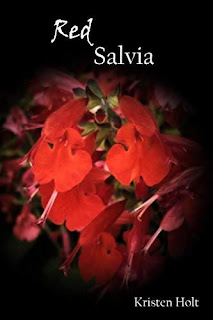 Red Salvia by Kristen Holt