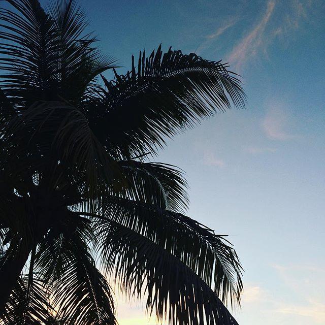 sunset-palm-tree