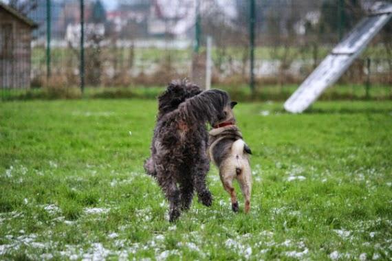 cachorros-brincando