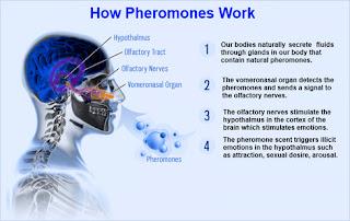 Cara Kerja Parfum Pheromone