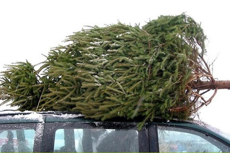 Seed To Feed Me: HOW TO KEEP YOUR CUT CHRISTMAS TREE