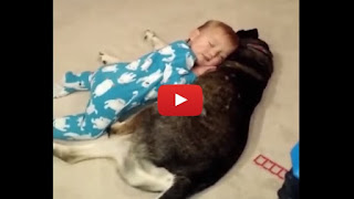 Bimbo si stringe al cane nel sonno - Video
