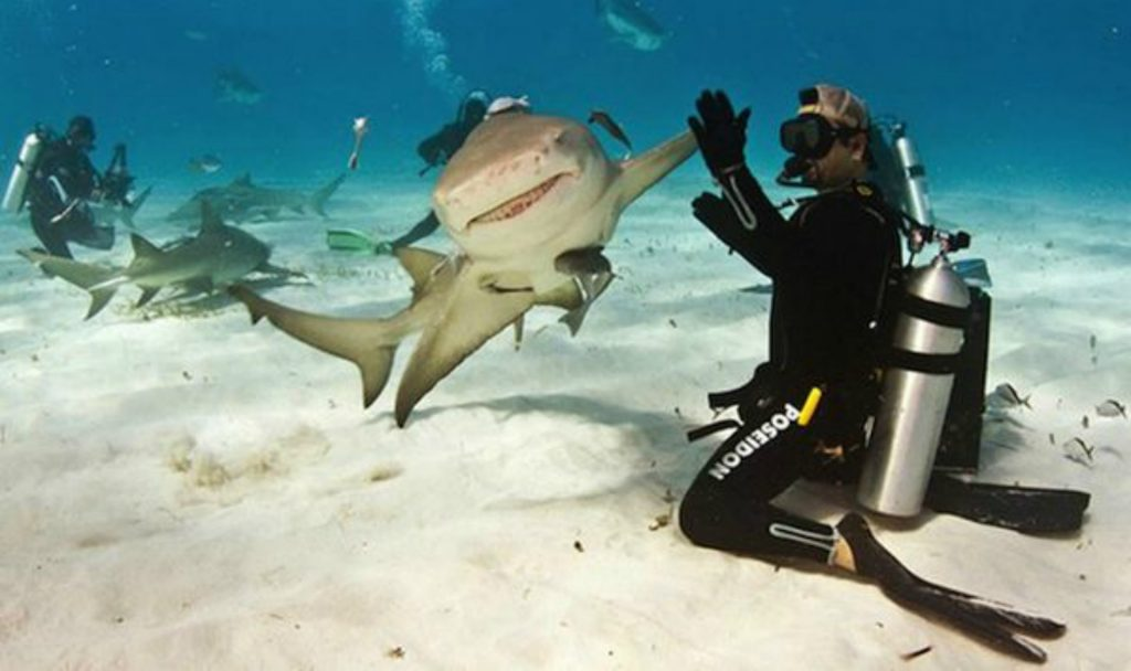 Friendly Shark