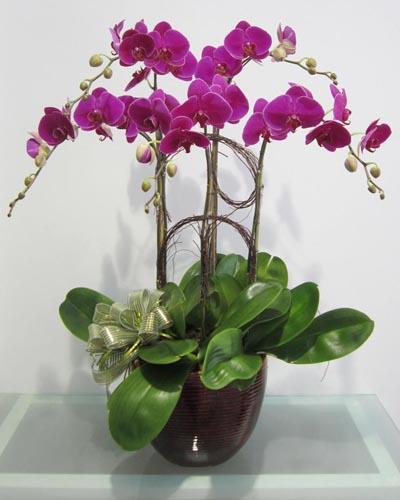 05 cành.Giống hoa Đài Loan giá 1.250.000 đ