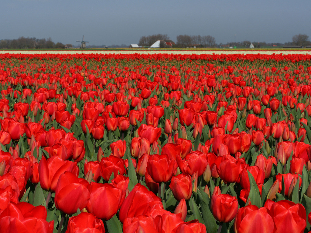 Netherlands – Tourist Attractions in Holland | Tourist ...